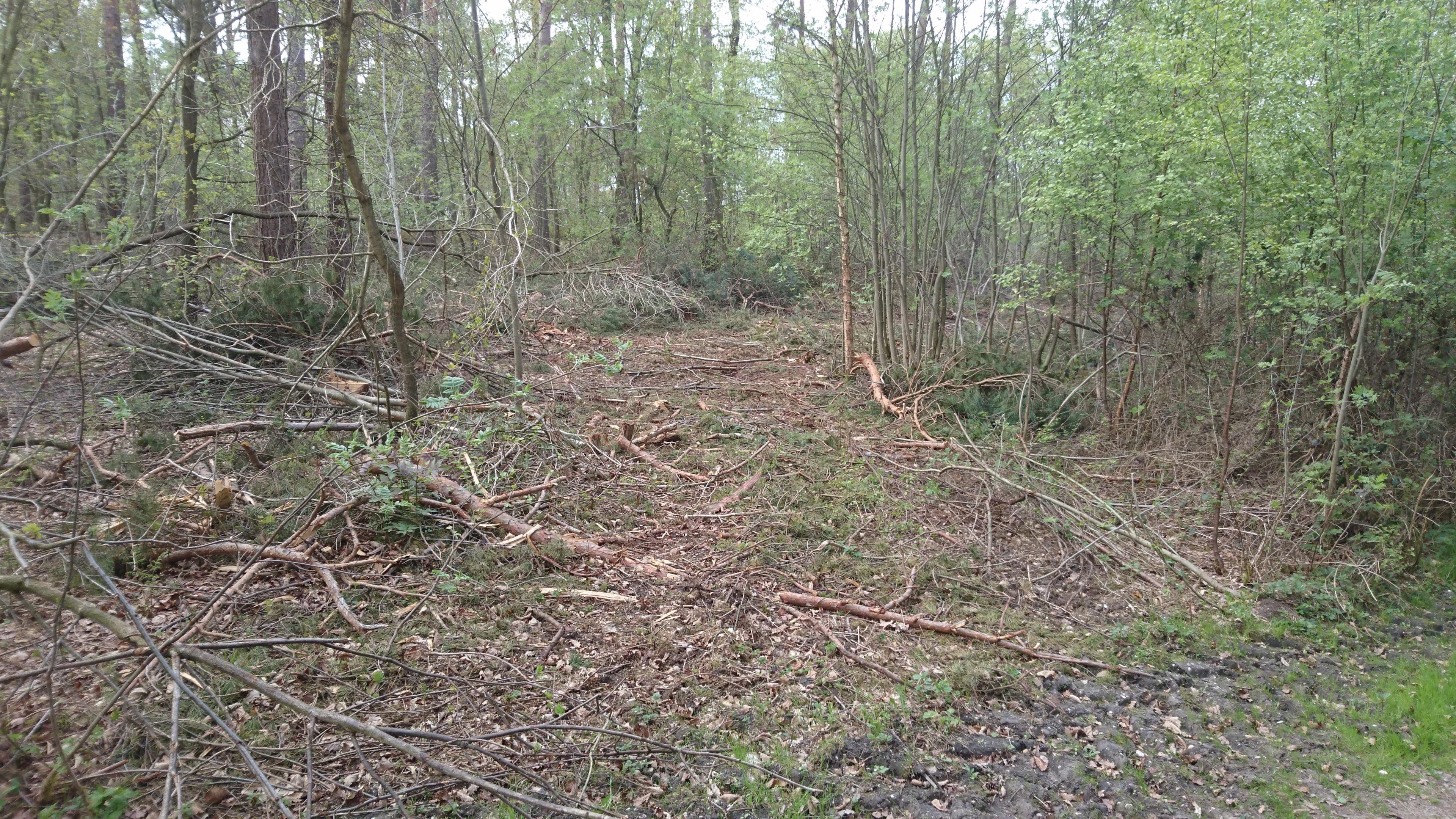 Durchforstungsarbeiten in Hinsbeck nach Protest jetzt naturschonender